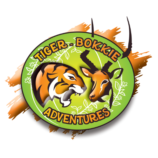 logo design for a company called tiger bokkie adventures south africa